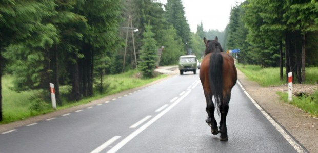 Celi Radars jeb zirgs