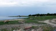 Ierasta piekrastes ainava laukos