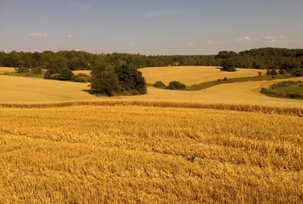 Labības kulšanas laikā lauku ainavās vērojami spilgti kontrasti